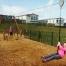 Knockalla Fun Day | Knockalla Caravan Park Playground